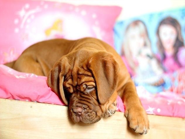 Мосгордума рассмотрит запрет насодержание вквартирах больших собак