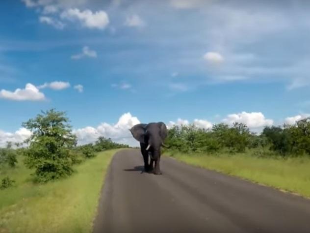 Слон не догнал туристов в ЮАР