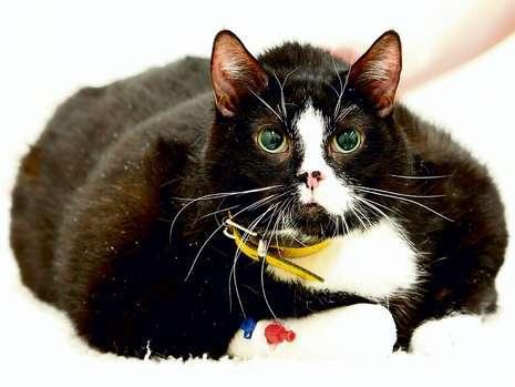 Ветеринары три дн боролись за жизнь кота, но спасти его не удалось. Фото: Bild