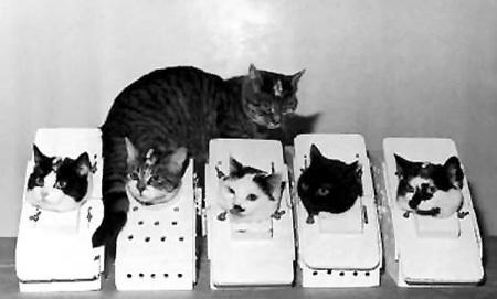 Астрокошки в симуляторах. Основным кандидатом был Феликс (стоит на заднем плане), но в космос полетела Фелисетт (крайняя слева) (фото из архивов НАСА)