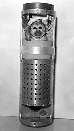 «Американский астронавт» - макак-резус Эйбл в герметичной капсуле