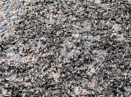 Мошкара устлала родную землю поганым ковром