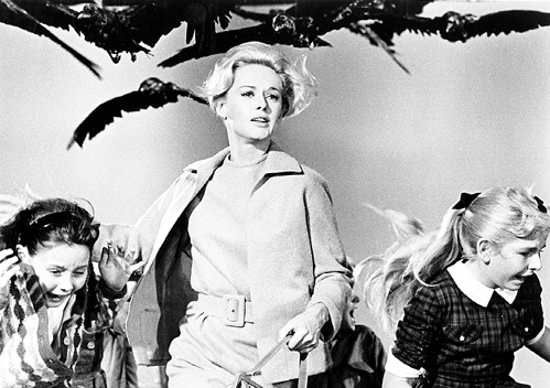 По официальной версии, буревестники, разбушевавшиеся в Калифорнии, отравились токсинами моллюсков. Впечатлившись этой историей, ХИЧКОК снял триллер «Птицы» (1961 г.) - фильм-притчу о возмездии за человеческие прегрешения