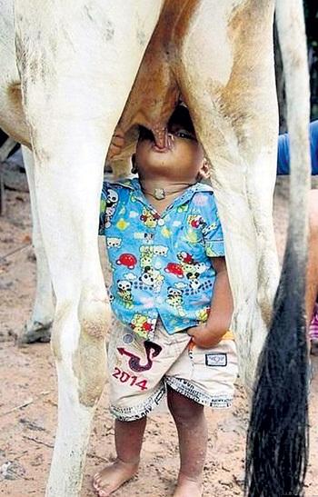 Молоко из-под коровы - тоже не гарантия качества