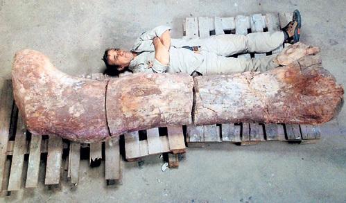 Человек не сравнится и с мизинцем найденного гиганта, имя которому обещают придумать только к 2015 году