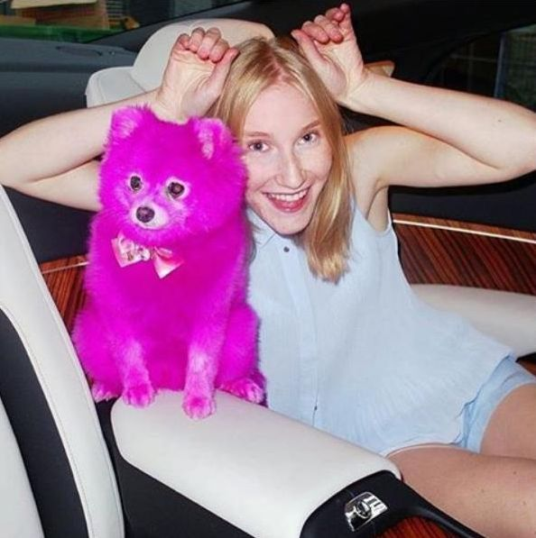 instagram.com/fluffy_thedoggy/