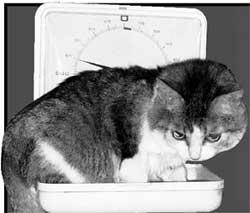 ЖИЗНЬ УДАЛАСЬ: после плотного обеда Яшка весит на 100 граммов больше