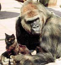 МОТЯ И АНТРАЦИТ: тому, кто обидит кота, явно не поздоровится