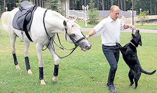 Чаще всего Путину дарили чистокровных скакунов