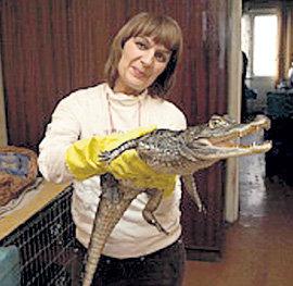 Ольга с ручным крокодилом