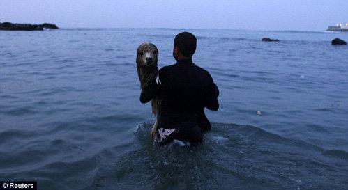 От купаний с хозяином Писко получает истинное удовольствие. Фото Daily Mail