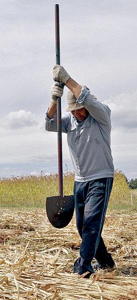 Александр БЫКОВ гибридом лома и лопаты отрубает листья с веников, убранных на своих 25 сотках