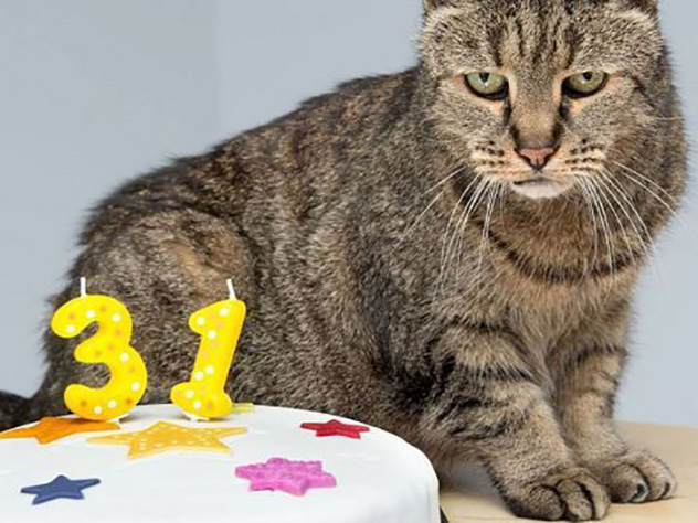 ВАнглии  скончался  старейший кот вмире