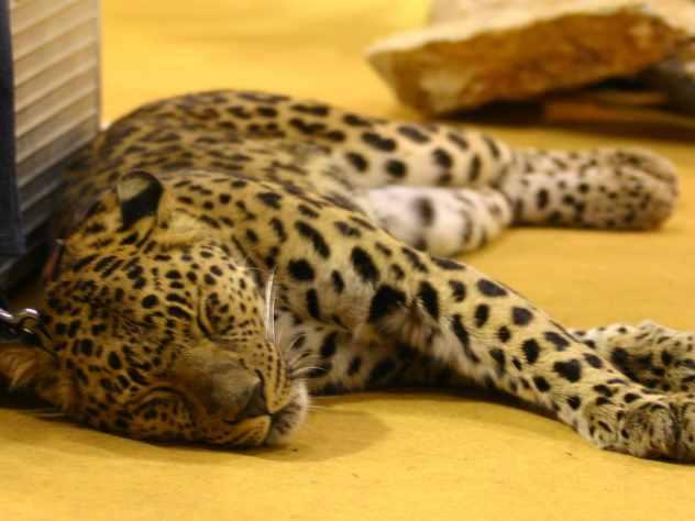 Генпрокуратура Казани выявила интернет-ресурсы попродаже электроудочек, сетей идаже леопарда