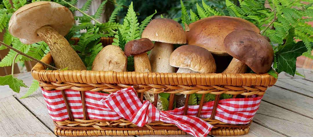 Чем полезен белый гриб