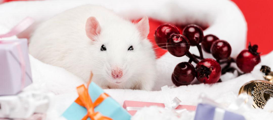 Талисманы в Год Крысы