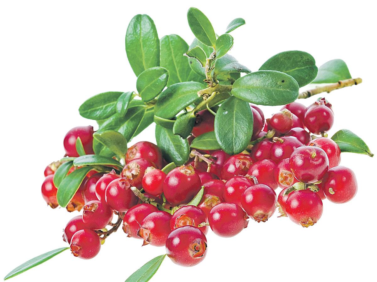 Царская ягода: ученые назвали продукт, защищающий от коронавируса