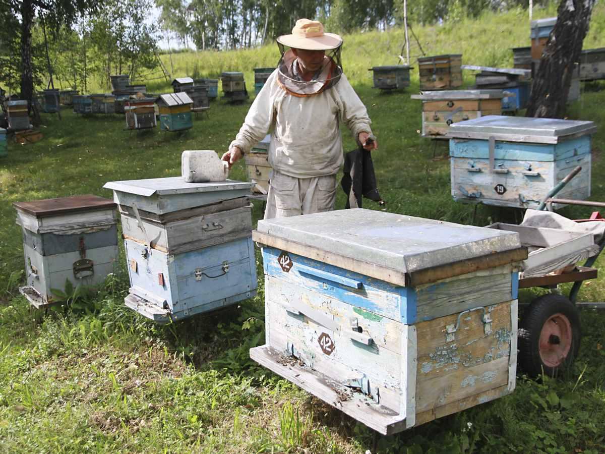 Российским пчеловодам запретят устраивать пасеки на болотах и кладбищах